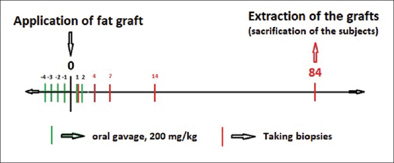Figure 2: Workflow of the experiment